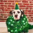 Cute Holiday Photo Ideas For Pets