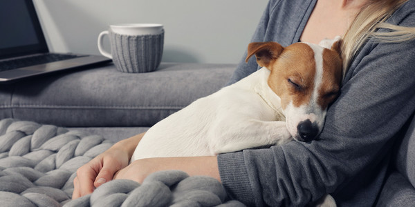 Benadryl For Dogs And Other Meds That Are Safe For Your Pet