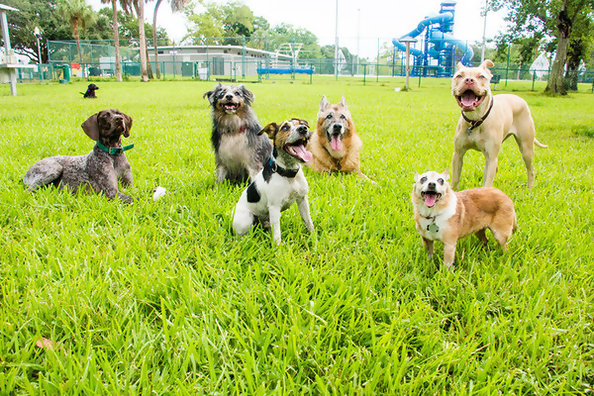 What Type Of Dog Best Suits Your Lifestyle?