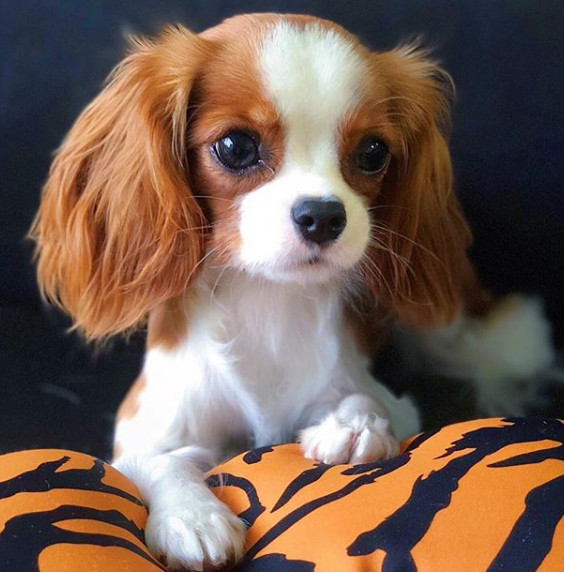 Adorable Dogs You Should Follow On Instagram