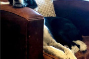 Dogs In Funny Sleeping Positions