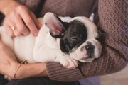 The Biggest Mistakes First Time Dog Owners Make