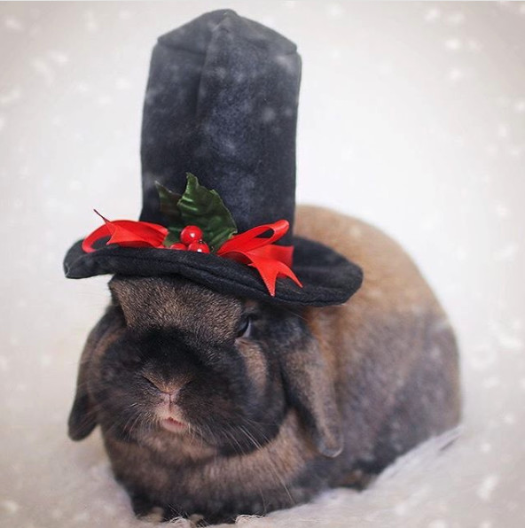 Pull A Rabbit Out Of A Hat