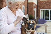 The Best Small Dog Breeds For Retirees