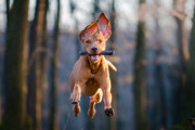 Here Are Crazy Things Dogs Do
