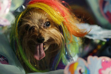 The Craziest And Funniest Dog Halloween Costumes